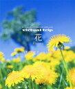virtual trip 花 Flowers 四季の山野草と高山植物【Blu-ray】 [ (BGV) ]