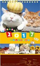 【卓上】かご猫カレンダー