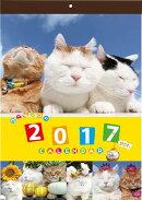 【壁掛】かご猫カレンダー