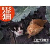 日本の猫カレンダー(2019) ([カレンダー])