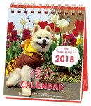 【卓上】俊介 週めくりミニ(2018カレンダー)