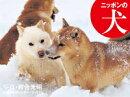 2020年カレンダー ニッポンの犬