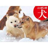 ニッポンの犬岩合光昭カレンダー(2020) ([カレンダー])