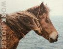 CHARLOTTE DUMAS:WORK HORSE