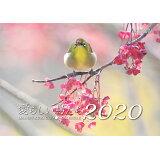 熊谷勝カレンダー 愛らしい鳥たち(2020) ([カレンダー])