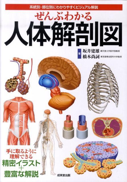 ぜんぶわかる人体解剖図 系統別・部位別にわかりやすくビジュアル解説 [ 坂井建雄 ]