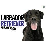 LABRADOR RETRIEVERカレンダー ([カレンダー])