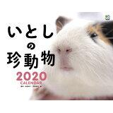 いとしの珍動物カレンダー(2020) ([カレンダー])