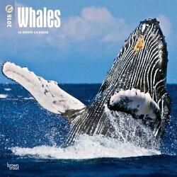 2018 Whales Wall Calendar