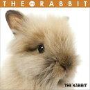 (ミニ・魚眼)THE RABBIT 2015年 カレンダー
