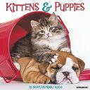 Kittens & Puppies 2020 Wall Calendar KITTENS & PUPPIES 2020 WALL CA [ Willow Creek Press ]