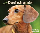 Just Dachshunds Daily Calendar