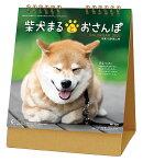 卓上 柴犬まるとおさんぽ(2021年1月始まりカレンダー)