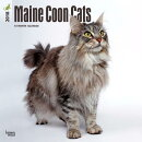 2018 Maine Coon Cats Wall Calendar