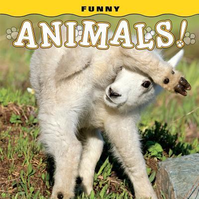 Funny Animals! FUNNY ANIMALS [ Steph Lehmann ]