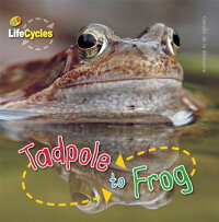 Tadpole_to_Frog