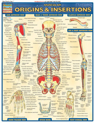 Muscular Origins & Insertions Laminate Reference Chart CHART-QUICKSTUDY MUSCULAR ORIG (Quickstudy: Academic) [ Vincent Perez ]