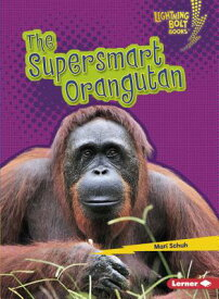 The Supersmart Orangutan SUPERSMART ORANGUTAN (Lightning Bolt Books (R) -- Supersmart Animals) [ Mari C. Schuh ]