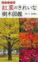 【バーゲン本】紅葉のきれいな樹木図鑑 ポケット版 [ 亀田 龍吉 ]