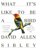 What It's Like to Be a Bird: From Flying to Nesting, Eating to Singing--What Birds Are Doing, and Wh