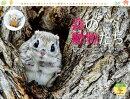 カレンダー2022 太田達也セレクション 森の動物たち Tiny Story in the Forests