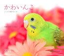 かわいんこ インコと小鳥のカレンダー