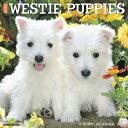 Just Westie Puppies 2020 Wall Calendar (Dog Breed Calendar) JUST WESTIE PUPPIES 2020 WALL [ Willow Creek Press ]