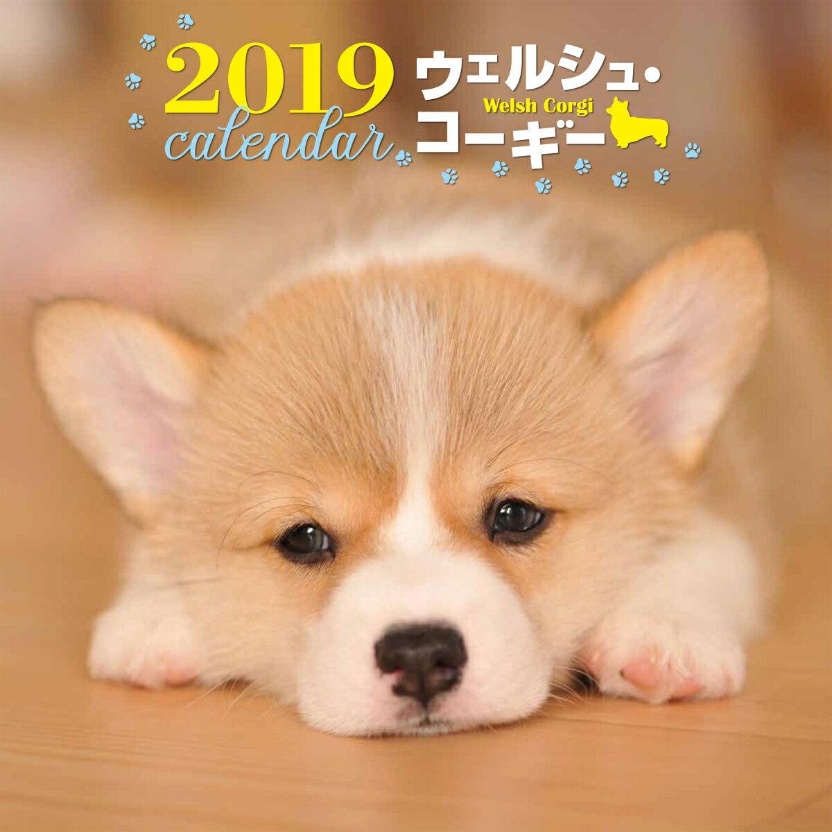 2019年大判カレンダー ウェルシュ・コーギー (カレンダー) [ 井川 俊彦 ]