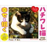 幸せを招くハチワレ猫カレンダー(2020) ([カレンダー])