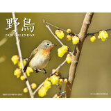 野鳥カレンダー(2020) ([カレンダー])