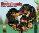 Just Dachshunds Calendar