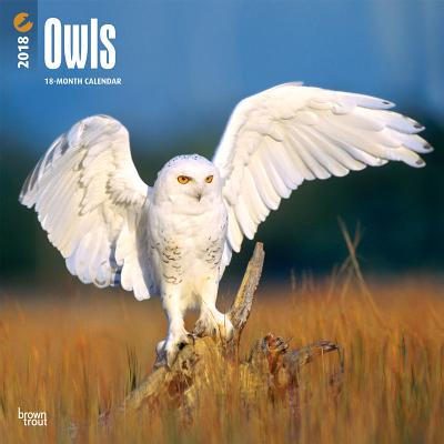 2018 Owls Wall Calendar CAL 2018-OWLS WALL CAL [ Inc Browntrout Publishers ]