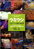 ウミウシ生きている海の妖精