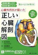 心臓外科医が描いた正しい心臓解剖図