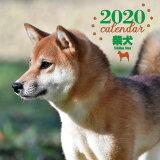 大判カレンダー柴犬(2020年) ([カレンダー])