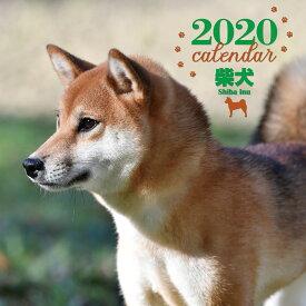 2020年 大判カレンダー 柴犬 [ 井川 俊彦 ]