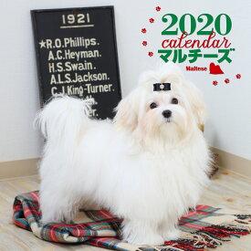 2020年 大判カレンダー マルチーズ [ 蜂巣 文香 ]