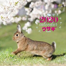 2020年 大判カレンダー ウサギ [ 井川 俊彦 ]
