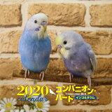 大判カレンダーコンパニオンバードインコ&オウム(2020年) ([カレンダー])