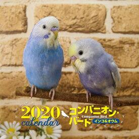 2020年 大判カレンダー コンパニオンバード インコ&オウム [ 大橋 和宏 ]