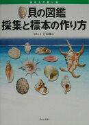 貝の図鑑採集と標本の作り方