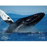 ワイドカレンダー世界で一番美しいクジラ&イルカカレンダー(2020年) ([カレンダー])