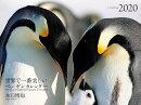 2020年 ワイド判カレンダー 世界で一番美しいペンギン カレンダー