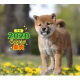 ミニ判カレンダー柴犬(2020年) ([カレンダー])