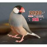 ミニ判カレンダー文鳥(2020年) ([カレンダー])