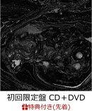 【先着特典】Are you ready? (初回限定盤 CD+DVD) (B2ポスター付き)
