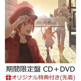 【楽天ブックス限定先着特典】Fight!! (期間生産限定盤 CD+DVD)(オリジナルジャケ写サイズステッカー) [ ClariS ]