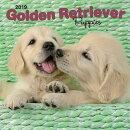 Golden Retriever Puppies 2019 Square