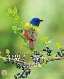 世界で一番美しい鳥図鑑