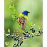 世界で一番美しい鳥図鑑 (ネイチャー・ミュージアム)